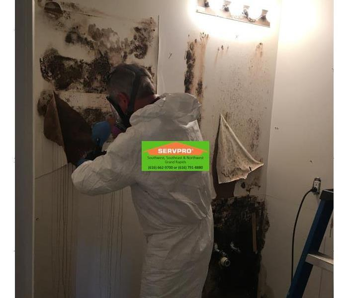 Mold Remediation Mold clean-up process