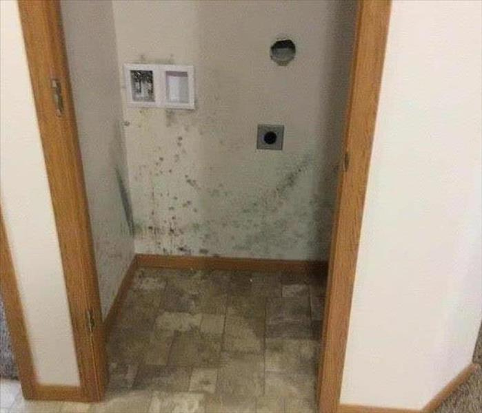 Mold Remediation Does Your Southwest Grand Rapids Home Have A Mold Problem?