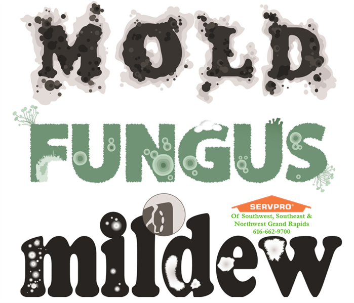 Mold Remediation Southwest Grand Rapids Get the facts on mold.